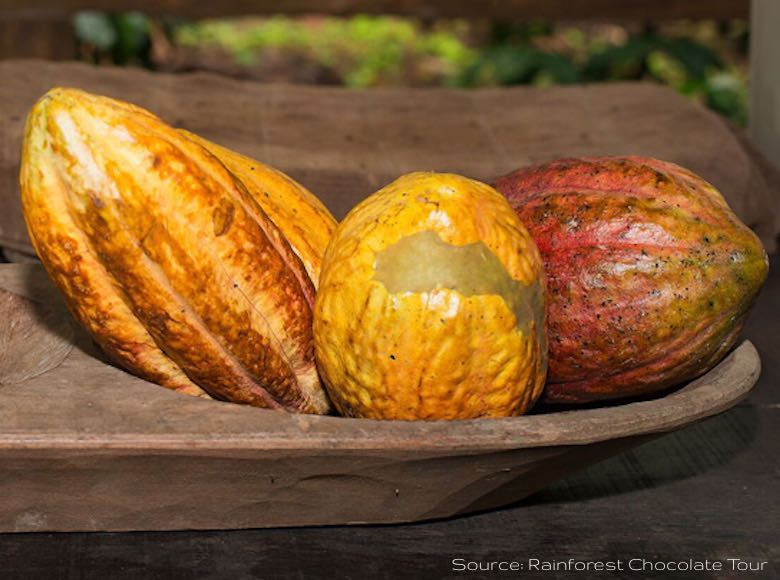 Trio of cacao beans in a wooden basket