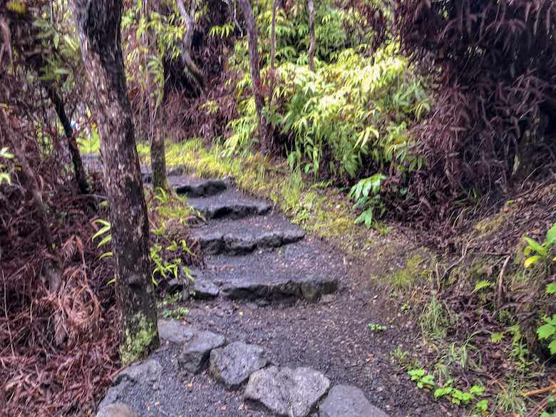 Path through the rainforest on the Kilauea Iki crater rim in Hawaii Volcanoes National Park