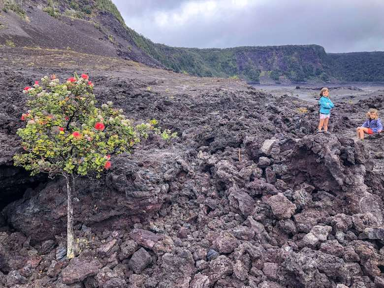 Right: Two little girls on the black lava of the Kilauea Iki Trail - Left: Ohio tree blossoming in the lava in Hawaii Volcanoes National Park