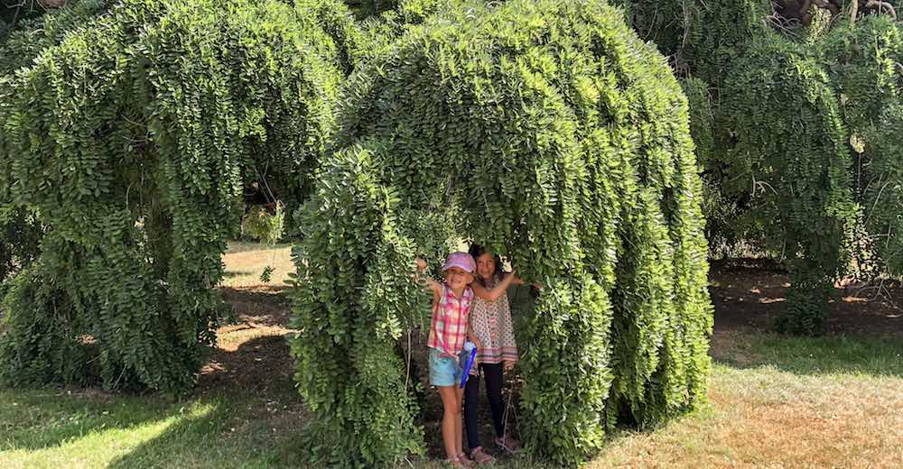 Two little girls playing hide and seek in a giant tree on the grounds of Marie Antoinette's estate le Petit Trianon while visiting Versailles from Paris