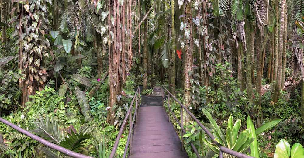 One of the best things to do in Hilo Big Island is visiting the Hawaii Tropical Botanical Gardens