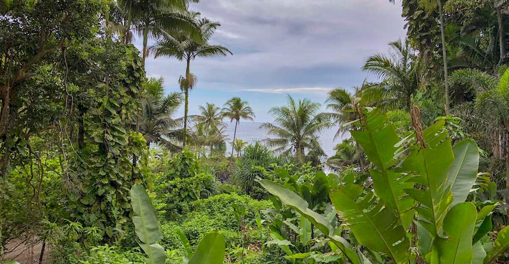 View of Onomea Bay in Hilo Hawaii as seen from the Hawaii Tropical Botanical Gardens