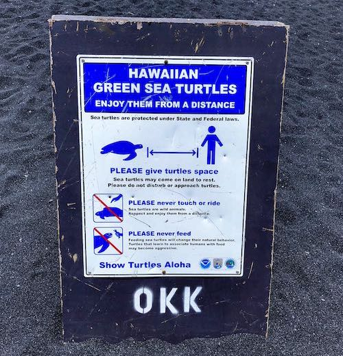 Hawaiian green sea turtles are frequent visitors to some of the best beaches Big Island