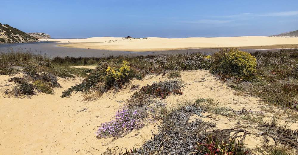 Wildflowers along the Bordeira river which mouths in the Atlantic at Praia da Bordeira beach, one of the nicest beaches in Portugal
