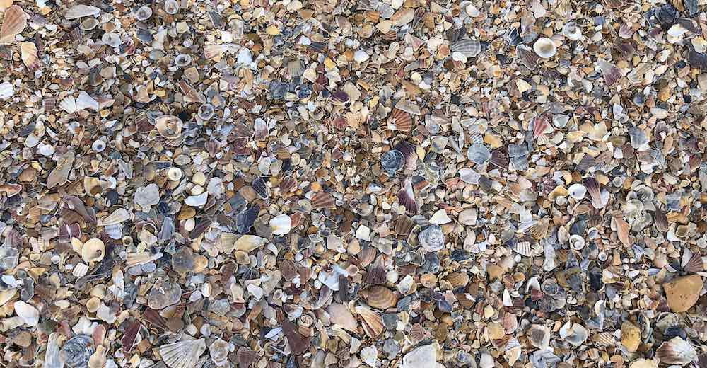 Shells at Praia da Dona Ana, one of the most popular Portuguese beaches