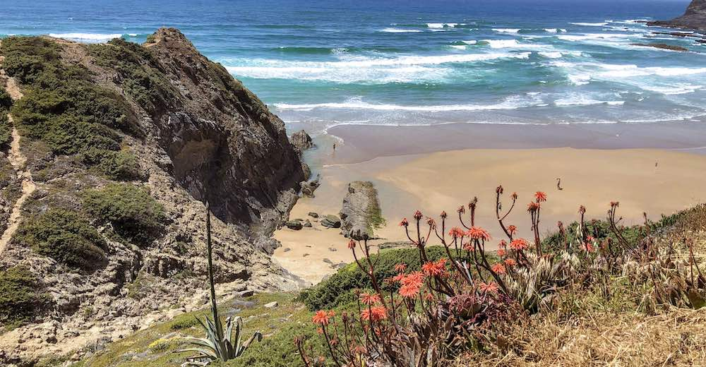 Wildflowers at Praia de Odeceixe, one of the best beaches Portugal