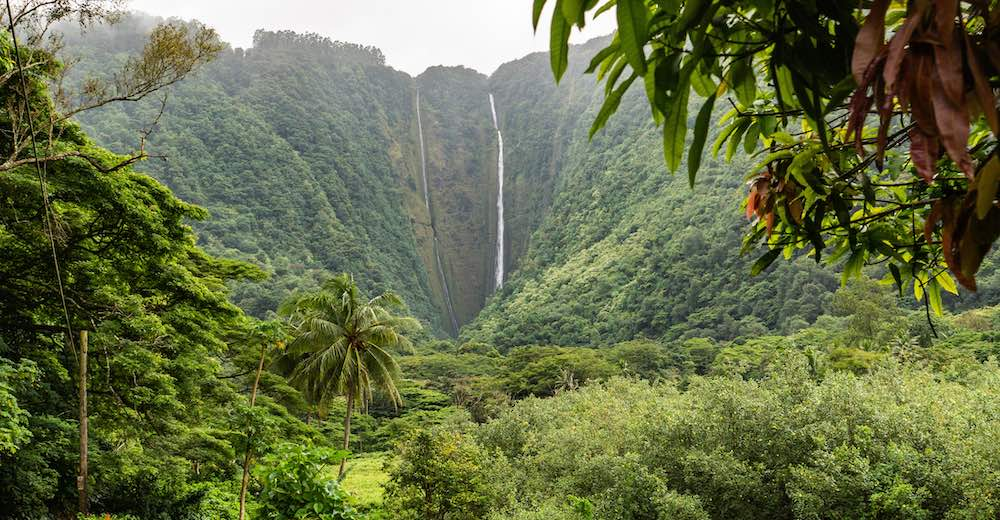 The best Big Island hike in Waipio with Hi'ilawe Falls lookout point