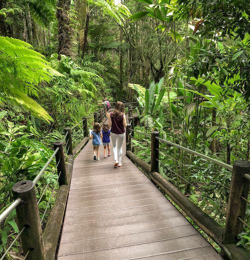 Elevated boardwalk in Hawaii Tropical Botanical Gardens on Big Island Hawaii
