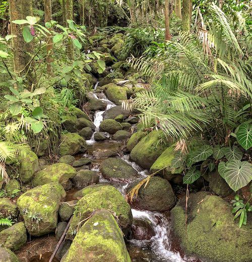 Downstream Onomea Falls Big Island Hawaii