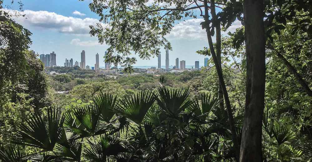 View over Panama City from the Parque Natural Metropolitano, a popular Panama sightseeing stop