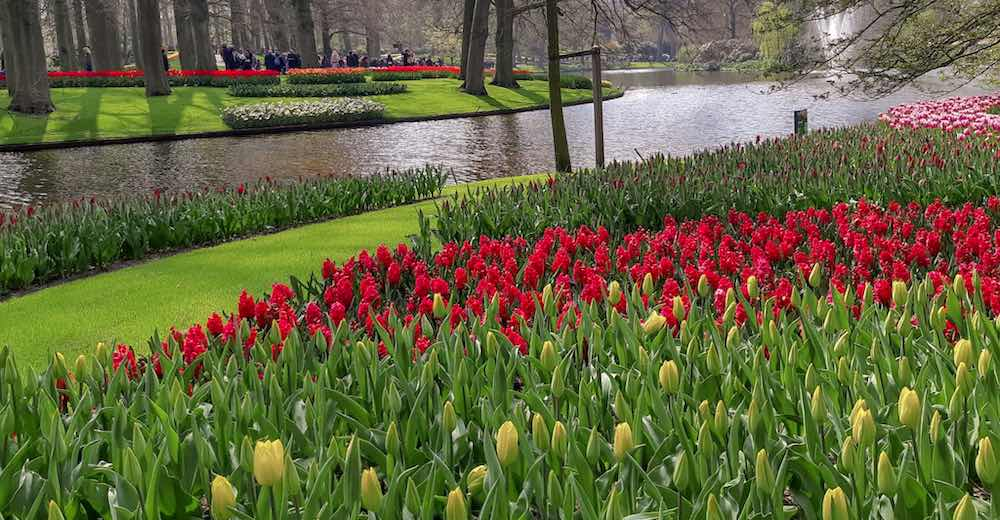 Deep red flowers next to the lake can be admired with Keukenhof tickets 2020