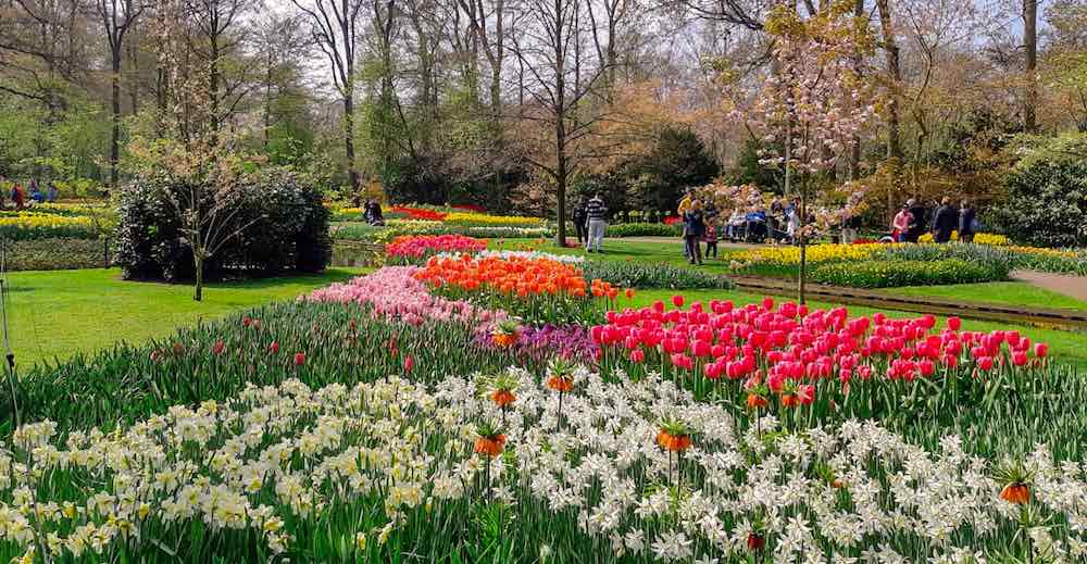 Gorgeous flower decor in the Keukenhof Gardens, check out this guide to the best Keukenhof price options