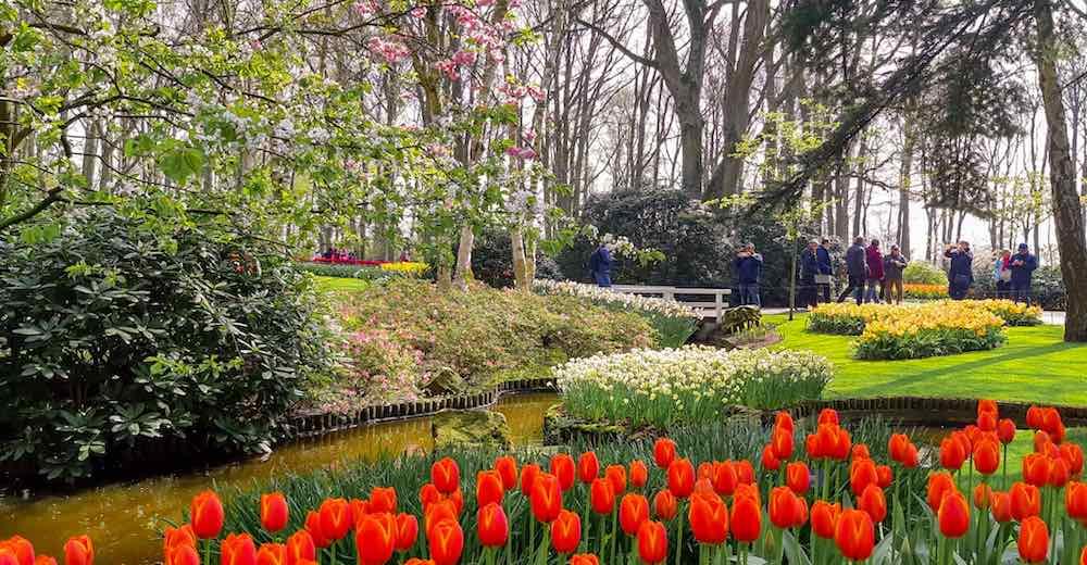 Amsterdam gardens Keukenhof flower parade of red tulips and yellow daffodils
