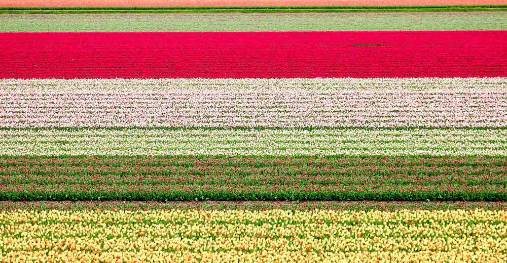 Colorful landscapes during Netherlands tulip season