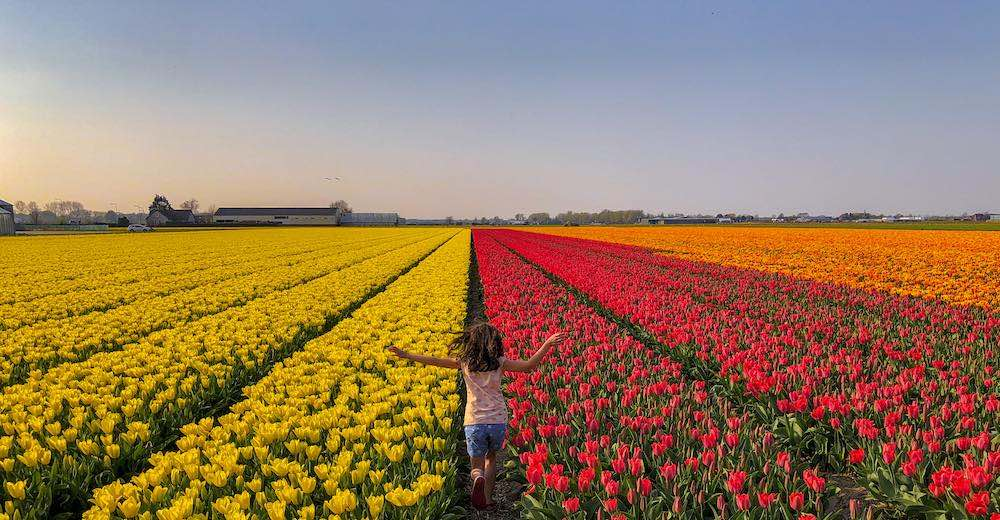 Little girl running in a tulip field Netherlands