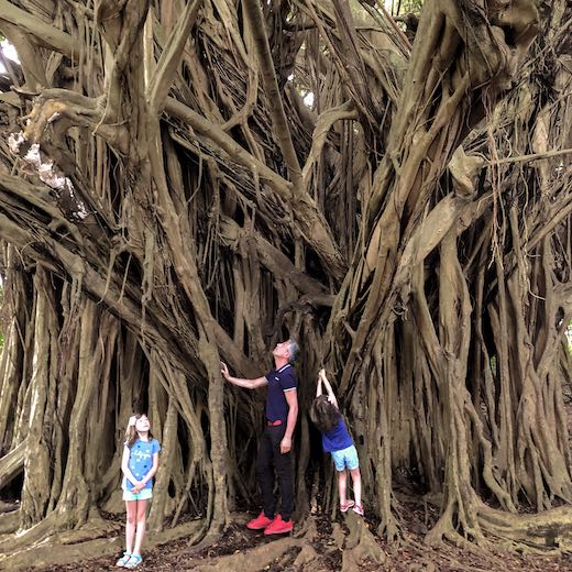 Big Island is the best island to visit in Hawaii for family vacations with an adventurous touch like climbing in trees