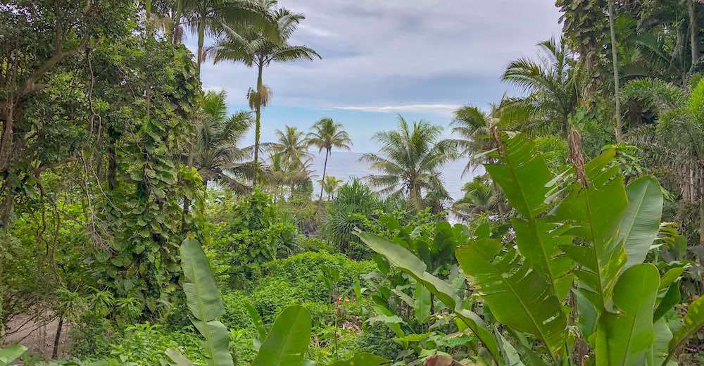 The Onomea Bay hike on Big Island guarantees the most amazing bay views