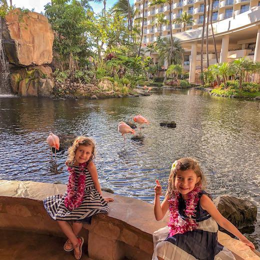 Flamboyance of flamingos at The Westin Resort Maui Kaanapali Beach