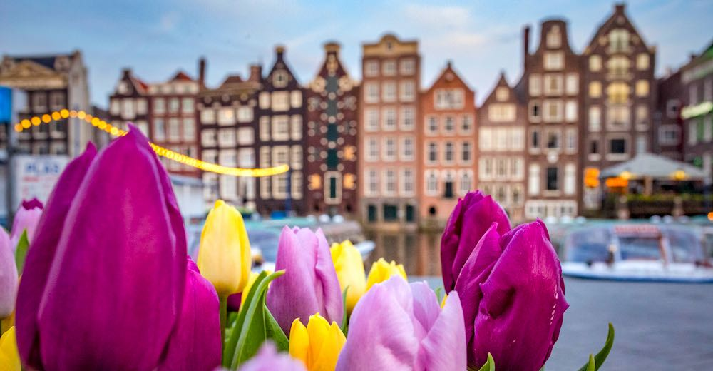 Tulip festival Amsterdam is the most popular flower event in the Dutch Capital