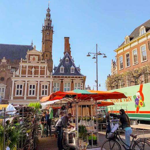 Haarlem flower market is located near the Netherlands Tulip Strip