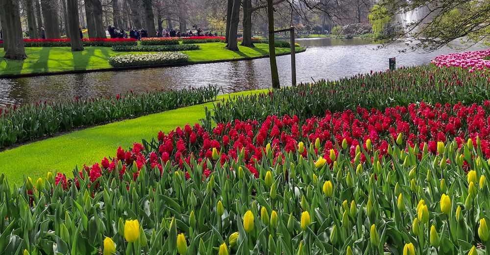 Colorful flower beds in the Keukenhof tulip garden Amsterdam
