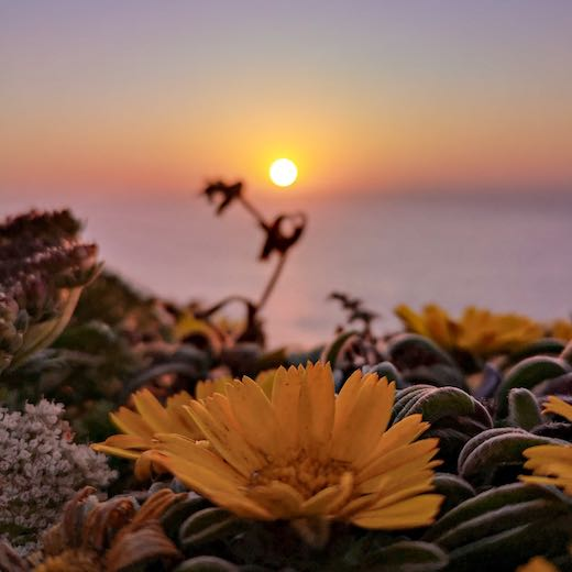 Sunset highlighting the wildflowers in the Parque Natural Sudoeste Alentejano