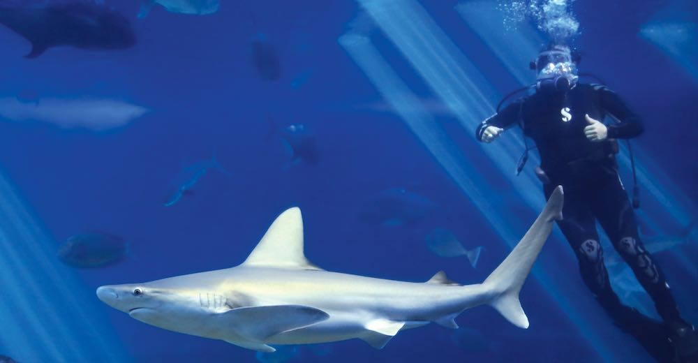 Diving in the shark tank of the Maui Ocean Center is one of the top things to do in Hawaii Maui