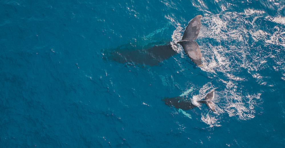 Maui whale watching from Lahaina