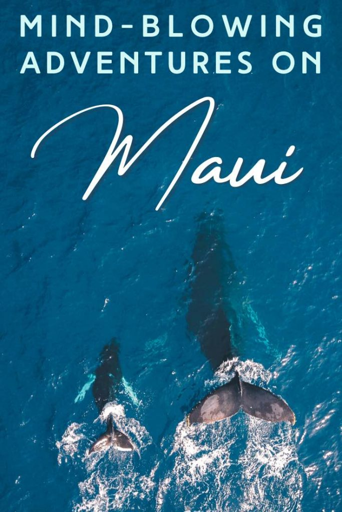 Whale and baby whale swimming in the Pacific ocean on Maui Hawaii