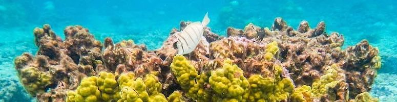Sunscreen for Hawaii: Reef-safe sunscreen buying guide