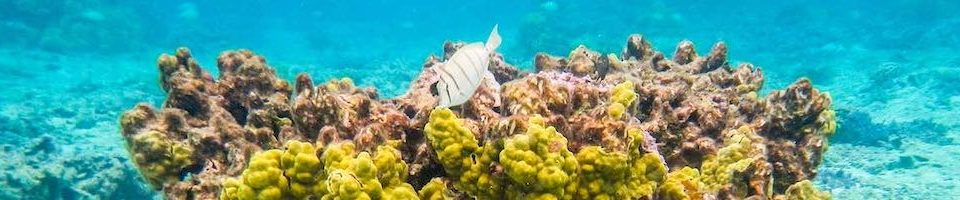 Buy right reef-safe sunscreen for Hawaii to help save the reefs and marine life
